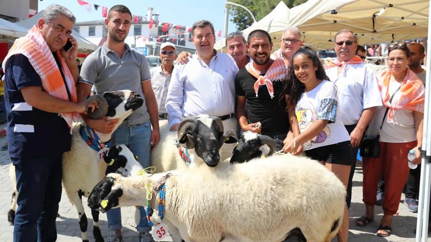 ovacik-tarim-ve-sakiz-koyunu-festivali-439