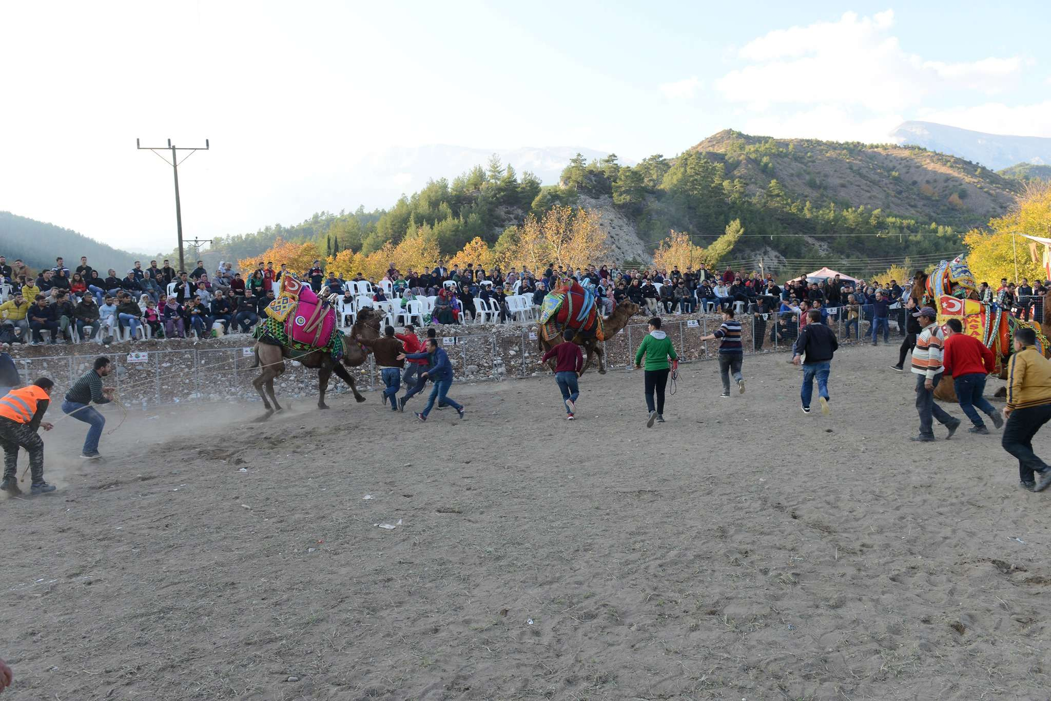 geleneksel-karacaoren-karabuk-deve-guresleri-festivali-1718