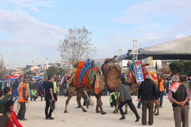 kepez-belediyesi-deve-guresleri-festivali-1719
