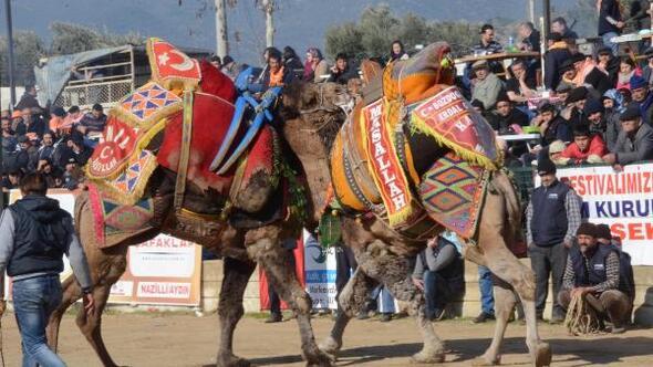 geleneksel-sultanhisar-deve-guresi-festivali-1724