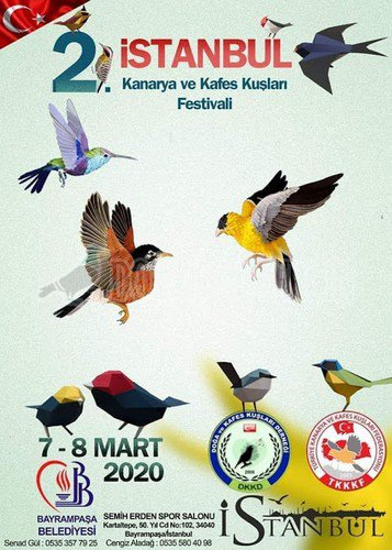 istanbul-kanarya-ve-kafes-kuslari-festivali-1895