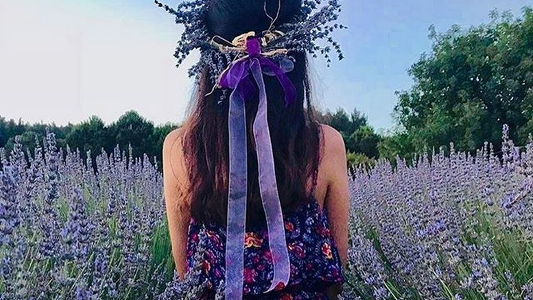 seferihisar-lavanta-festivali-772